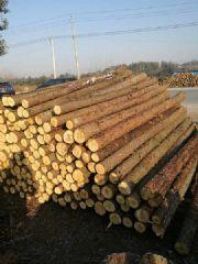 大量出售杉木原木,方木,代锯各种规格木方