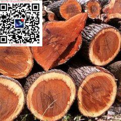 松木锯材毛板~澳大利亚出口