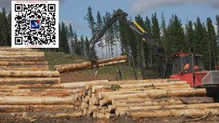澳洲松木锯材毛板