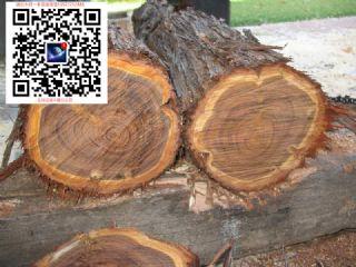 松木锯材毛板~澳洲出口