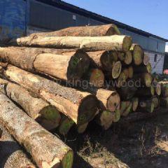 德国金威木业进口欧洲白橡木 原木 实木 ABC级