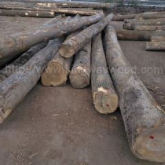 德国金威木业 进口欧洲木材 白蜡木 水曲柳 实木