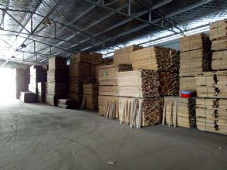 常年供应俄材水曲柳、榆木、桦木烘干板材