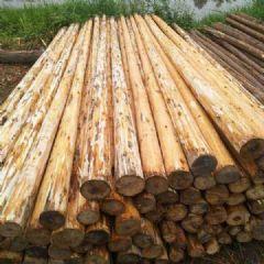 杉木,绿化干,原木,板芯,生态板