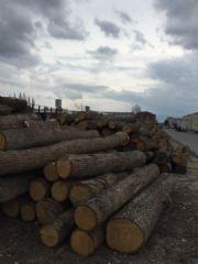 自家大量云杉,橡木出售,寻意向买家