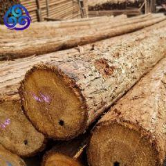 货场直供1到8米杉杆小头直径5到8厘米绿化杆杉木杆