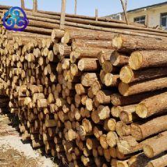 林场直发2米2.5米杉木杆杉杆绿化杆天津九洲天泽