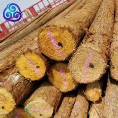 原木沙杆6米7米8米杉杆杉木杆批发市场天津九洲天泽