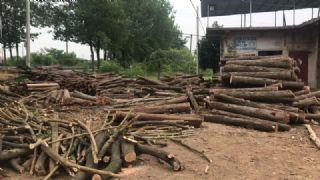 地森木材加工厂承包树林,上门收树,原木批发