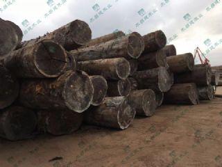 新到非洲刚果奥坎原木300方,大径大板料,小径地板