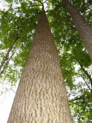 黄褐色树皮纹理素材