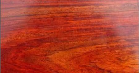 红木树种样板剖面图(三)_木业资讯-中国木材网