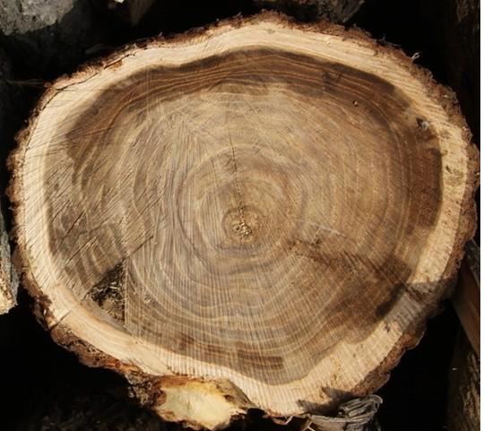 木材识别方法和技巧_木业资讯-中国木材网