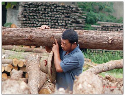 高温下的劳动者:木材加工厂里的搬运工