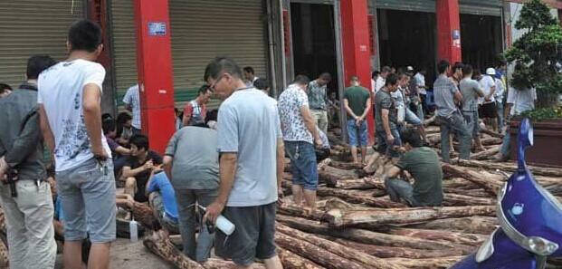 红木价格下降 仙游木材市场继续疯狂抢购红木原料