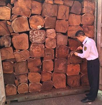 九江检验检疫局在一批非洲进口原木中检出活体滑刃线虫和小杆线虫