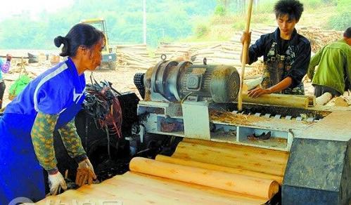 """广西桉木单板市场旺起来了,但仍有难题需""""化解"""""""