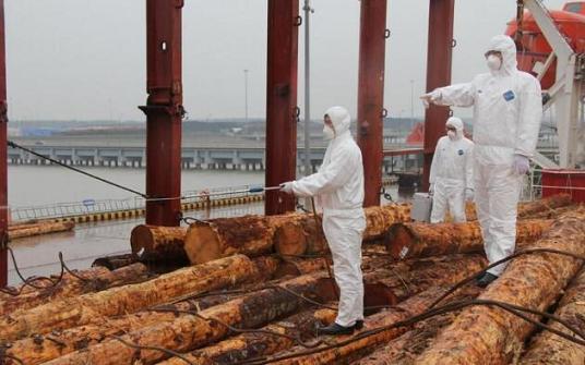 为什么需要给木材做检验检疫?