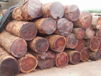 未来红木市场,缅甸花梨称王已成定局