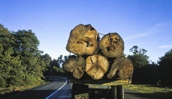 木材行业:控资源,赢未来