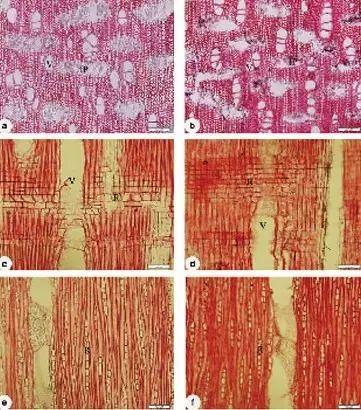 木材DNA:当木头有了基因,木材贸易会发生什么改变?