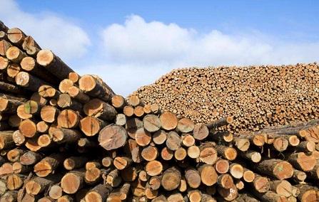 北美木材价格将更高