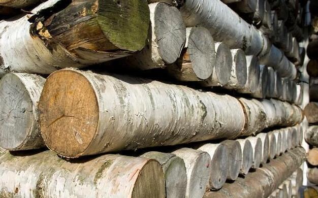 植物世界之最:世界上最硬的木材,比普通的钢铁还要硬一倍