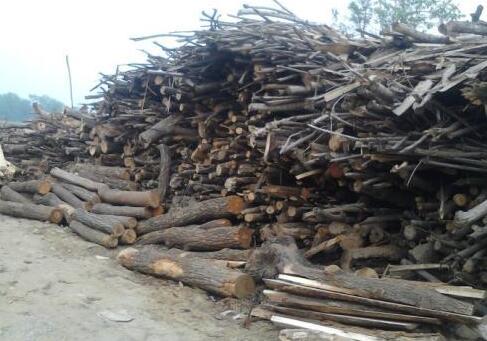 木材等生物质材料是化石资源的环保替代品