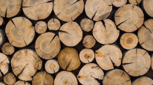 木材加工业未来在哪?