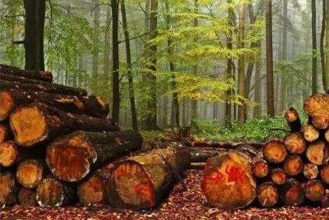 《阔叶树原条》等23项木材类林业行业标准2020年4月1日实施