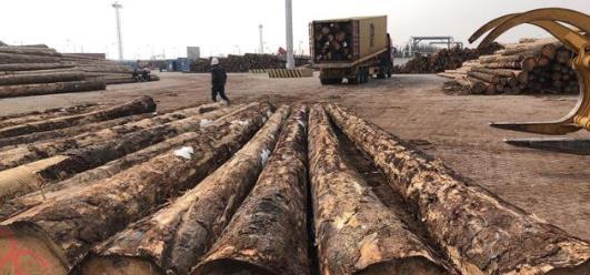 两个月内中国进口木材供应充足