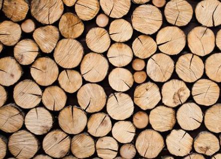 我国木材精准识别技术有新突破