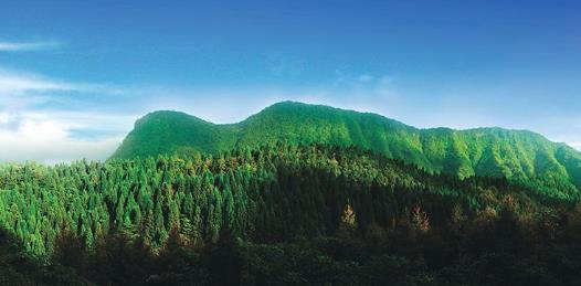 《通知》:进一步规范林权类不动产登记