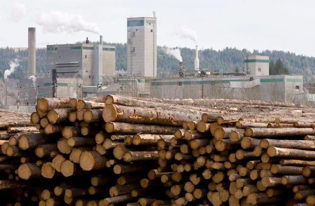 中国会禁止进口加拿大木材吗?