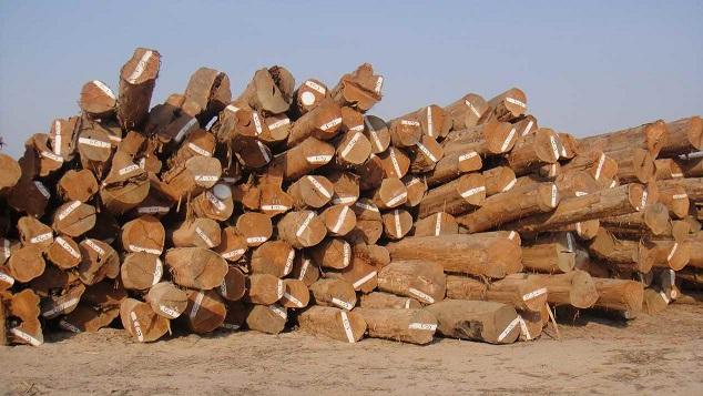 缅甸计划网上拍卖上万吨木材