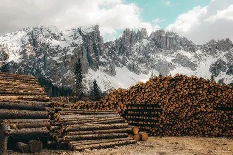 北美木材价格为何暴涨暴跌?这八张图都说明白了